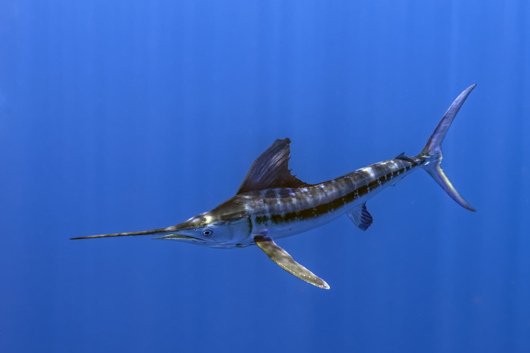 vissen curacao, curacao fishing, sport vissen curacao, zeevissen curacao, vissen op zee